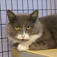 Adopt A Pet :: Peaches - Flemington, NJ