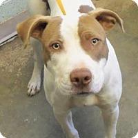 Adopt A Pet :: Bozzi - Decatur, GA