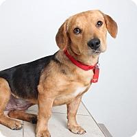 Adopt A Pet :: Lolita D161864: PENDING ADOPTION - Edina, MN