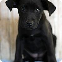 Adopt A Pet :: Rhea - Waldorf, MD