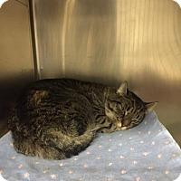 Adopt A Pet :: Mufasa - Menands, NY