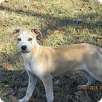 Adopt A Pet :: Katie - West Springfield, MA