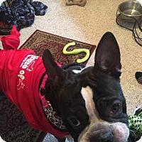Adopt A Pet :: Nicolas - Van Vleck, TX
