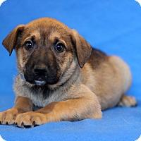 Adopt A Pet :: Alabama - Waldorf, MD