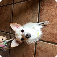 Adopt A Pet :: Polly - Tucson, AZ