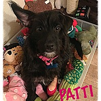 Adopt A Pet :: Patti - Tempe, AZ