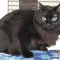 Adopt A Pet :: Hamlet - Conroe, TX
