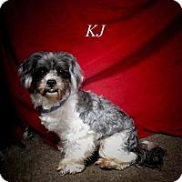 Adopt A Pet :: KJ - Chester, IL