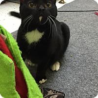 Adopt A Pet :: Strawberry - Pasadena, CA