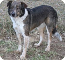 Sally | Adopted Dog | ...