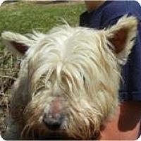 Adopt A Pet :: Wilhelmina - Antioch, IL