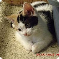Adopt A Pet :: Wilimina - Acme, PA