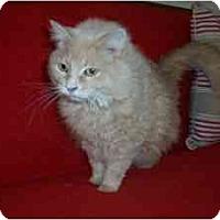 Adopt A Pet :: Tinkerbell2 - Columbus, OH