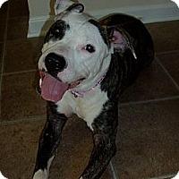 Adopt A Pet :: Dolly Mae - Raleigh, NC