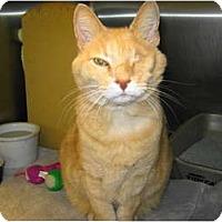 Adopt A Pet :: Kendall - Warminster, PA