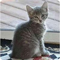 Adopt A Pet :: Dollar - Reston, VA