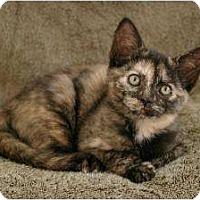 Adopt A Pet :: Pikachu - Sacramento, CA