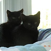 Adopt A Pet :: Lily - CARVER, MA