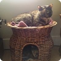 Adopt A Pet :: Caramel - Vancouver, BC