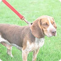 Adopt A Pet :: Blue - Tumwater, WA