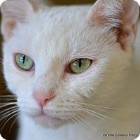 Adopt A Pet :: Stella - Island Park, NY