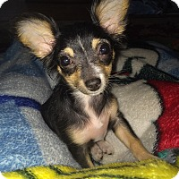 Adopt A Pet :: Princess - Brea, CA