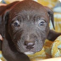Adopt A Pet :: Connie - Waldorf, MD