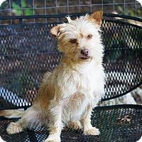 Adopt A Pet :: Toby - Greenville, SC