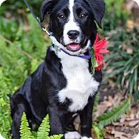 Adopt A Pet :: Jitterbug - Baton Rouge, LA
