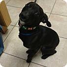 Adopt A Pet :: Ella