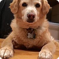 Adopt A Pet :: Sir FigGerald Newton - Los Angeles, CA