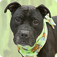 Adopt A Pet :: Votto - Cincinnati, OH