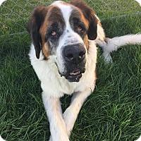 Adopt A Pet :: George - Oswego, IL