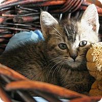 Adopt A Pet :: Greta - Sherman Oaks, CA