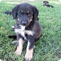 Adopt A Pet :: Van Wilder - Trenton, NJ