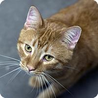 Adopt A Pet :: Fred - Fremont, NE