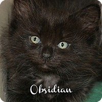 Adopt A Pet :: Obsidian - Idaho Falls, ID