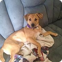 Adopt A Pet :: Mara Jade - Newport, KY