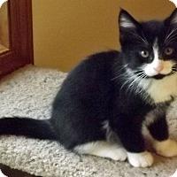 Adopt A Pet :: Donny - Salem, OR