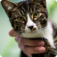 Adopt A Pet :: Fore - Indianapolis, IN