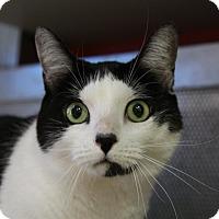 Adopt A Pet :: Poe - Sarasota, FL
