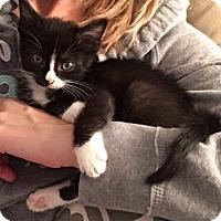 Adopt A Pet :: Jagger - Tunica, MS