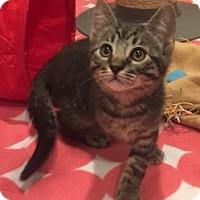 Adopt A Pet :: Dillon - Irvine, CA