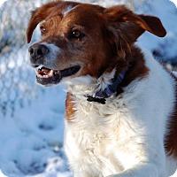 Adopt A Pet :: CO/King - Seattle, WA