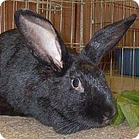 Adopt A Pet :: BeBe - Foster, RI