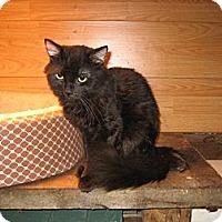 Adopt A Pet :: KoKo - Portland, ME