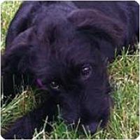 Adopt A Pet :: Mandy - Cleveland, OH