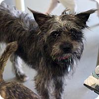 Adopt A Pet :: Ned - Atlanta, GA