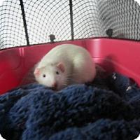 Adopt A Pet :: BOB and TED - Philadelphia, PA