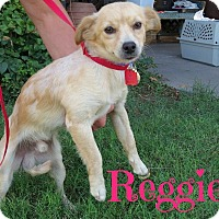 Adopt A Pet :: Reggie (Courtesy Listing) - Scottsdale, AZ